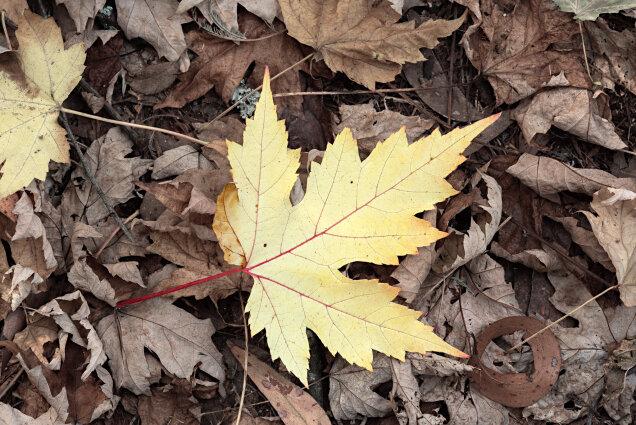 Golden Leaf Alfred Nicholas Gardens